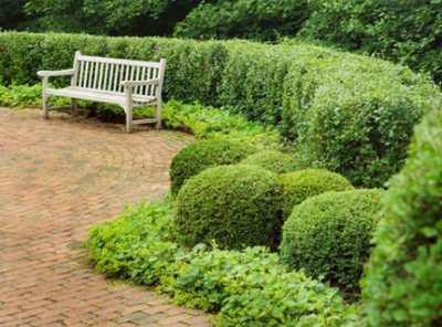 Живая изгородь – как сделать ее собственными руками?