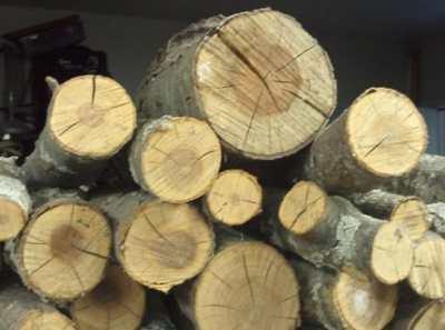 Заделка трещин в бревне – лечим дерево самостоятельно